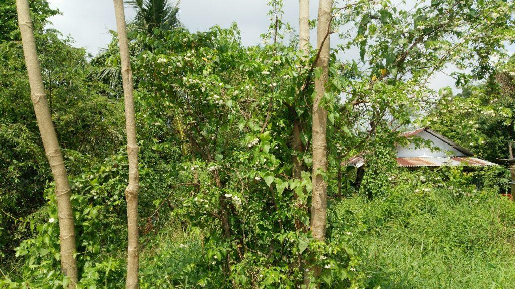 アバイブーベ ハーブ農場 自然のままの状態でハーブを育成します