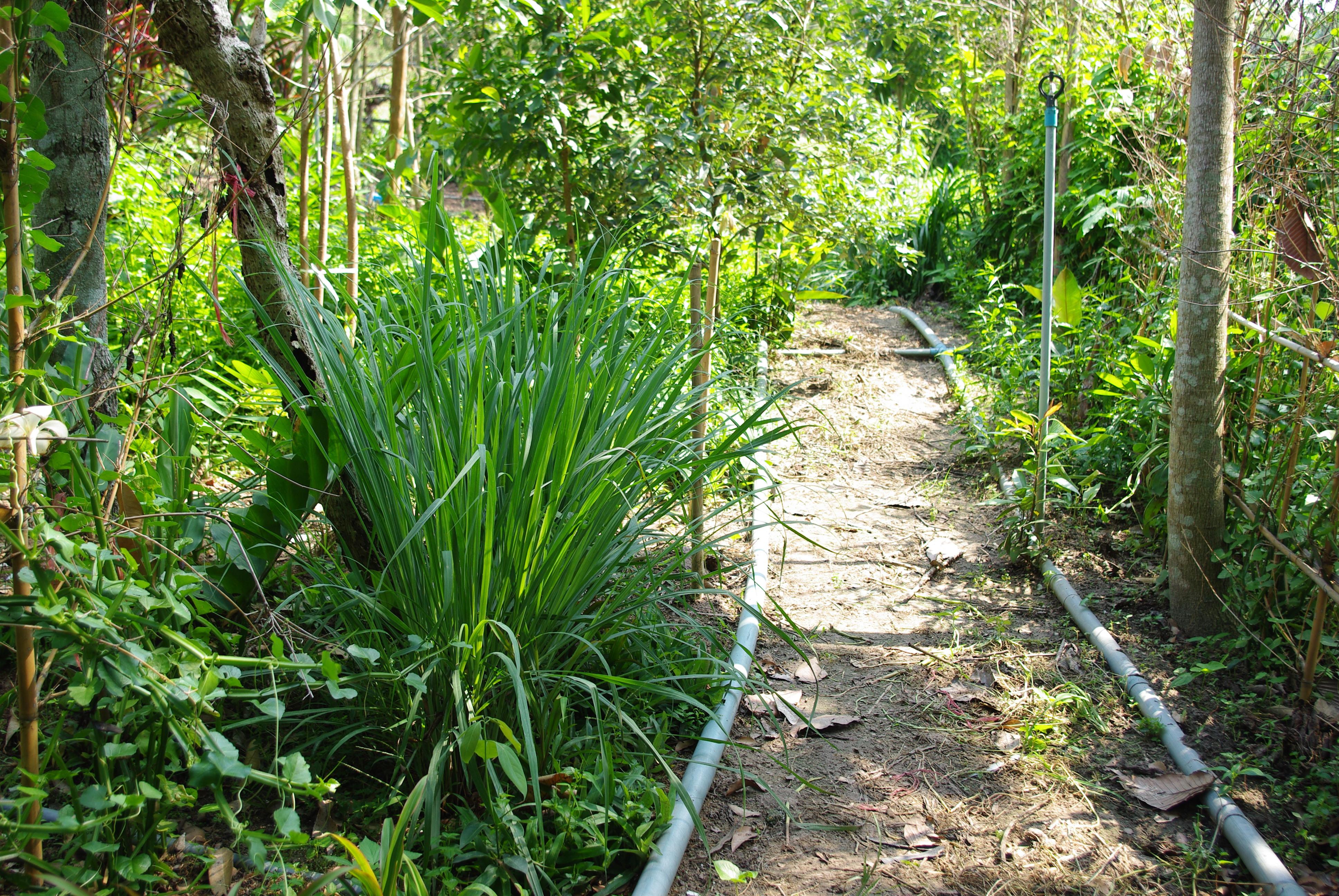 ワイルドクラフト農法のハーブ園
